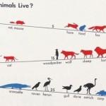 ペットの寿命