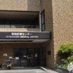 セカンドオピニオン 動物病院