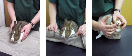 ウサギの投薬法