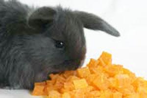 ウサギの簡単投薬法