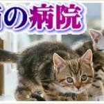 猫の動物病院