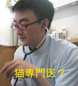 猫専門医?