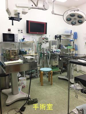 あおぞら動物病院 手術室