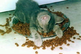 猫のダイエット 肥満