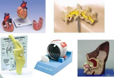 動物病院 説明用の模型