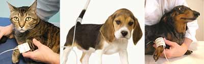 犬猫の血圧